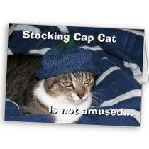 stocking_cap_cat_is_not_amused_card-p137421779841039293tru4_21020110724-22047-r7c15m.jpg