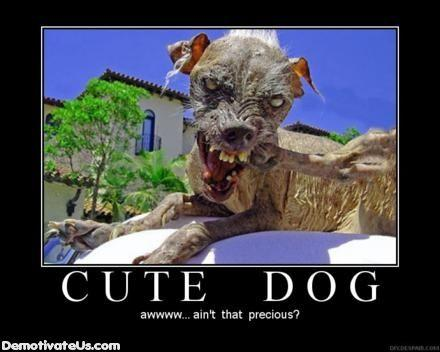 cute-dog-demotivational-poster.jpg