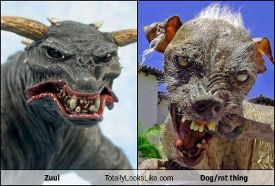 zuul-totally-looks-like-sam.jpg