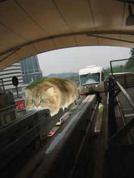 monorail_cat-350.jpg