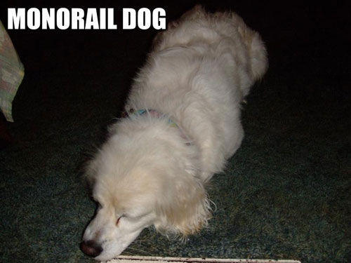 monorail-dog-funny-dog-pictures-loldog.jpg