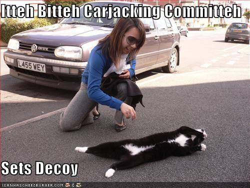 funny-pictures-cat-is-a-decoy-for-a-carjacking-committee.jpg
