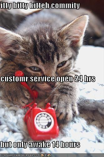 funny-pictures-itty-bitty-kitty-committee-customer-service-hotline.jpg