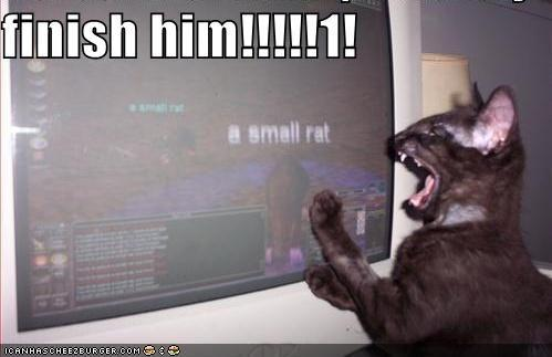 funny-pictures-mmorpg-cat-suggests-you-kill-the-small-rat1.jpg