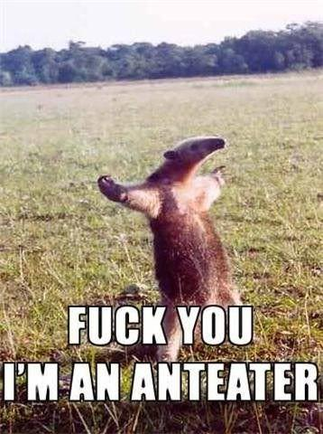 FUCK_YOU_I_AM_AN_ANTEATER.jpg