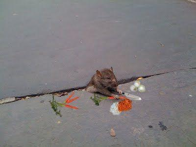 sad_rat_sidewalk_27.jpg
