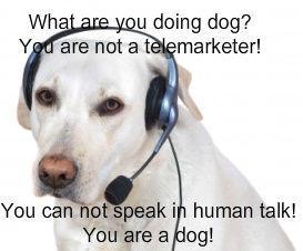dog_phone_operator.jpg