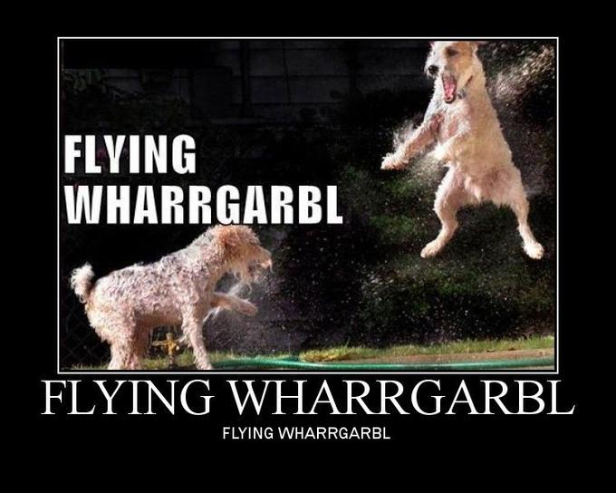flying_wharrgarbl.jpg