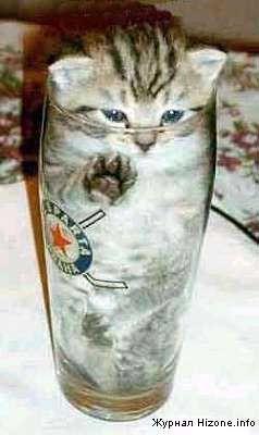 cat_in_a_bottle.jpg