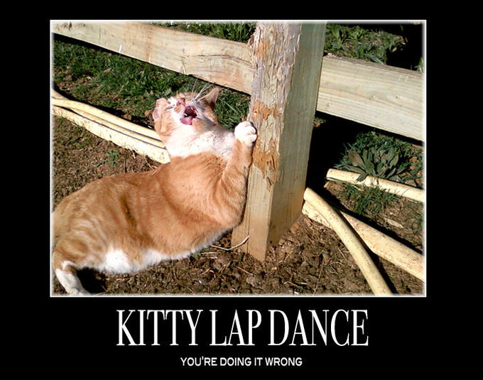 KittyLapDance.jpg