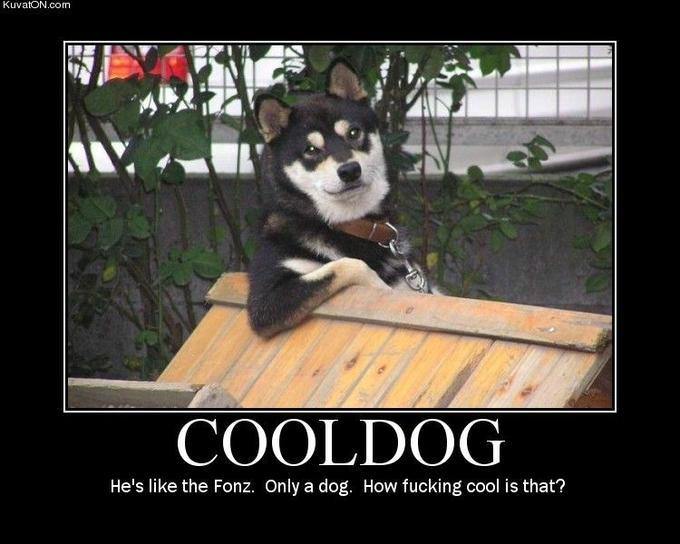 cool_dog.jpg