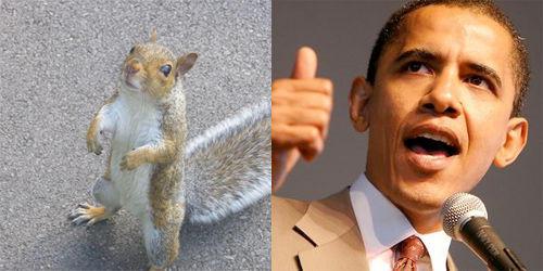 squirrelvsobama.jpg