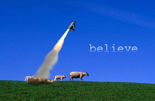 sheep.jpg_believe.jpg