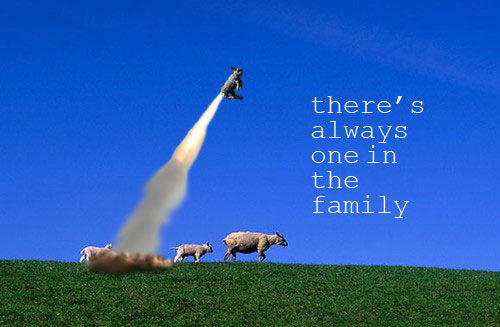 sheep_1intheFam.jpg