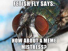 fetish_fly_meme_mistress.jpg