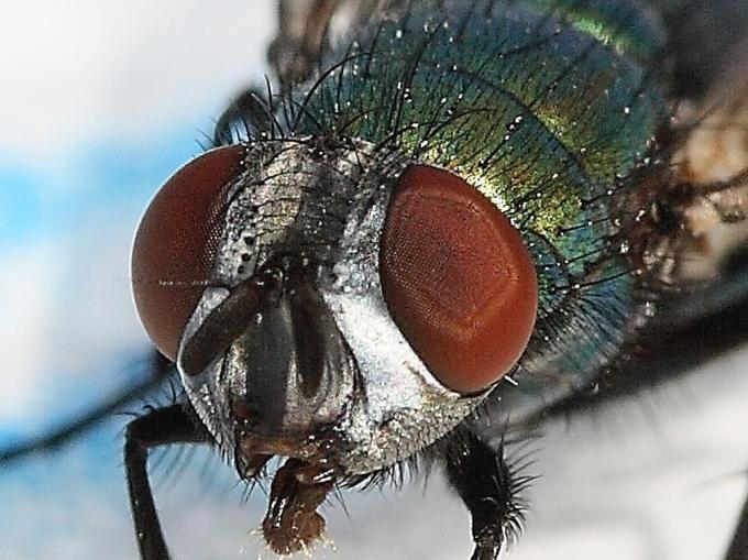 fly_02.JPG