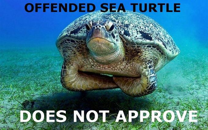 turtle-does-not-approve.jpg