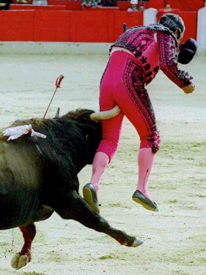 bull-horn-up-ass.jpg