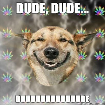Stoner-Dog-DUDE.jpg