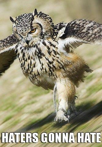 OWL_3-2.jpg