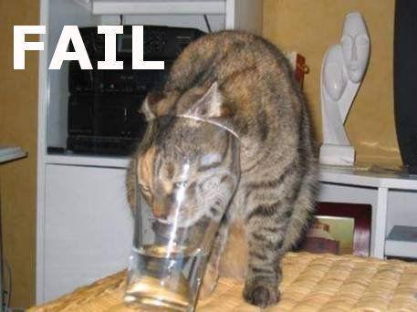 Failcat.jpg