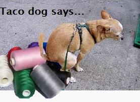 tacodog.png