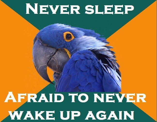 parrot2.jpg