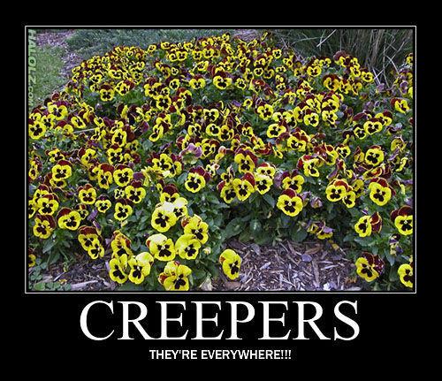 halolz-dot-com-minecraft-creeper-flowers-motivational.jpg