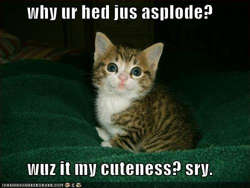 funny-pictures-kitten-makes-head-explode-cuteness.jpg