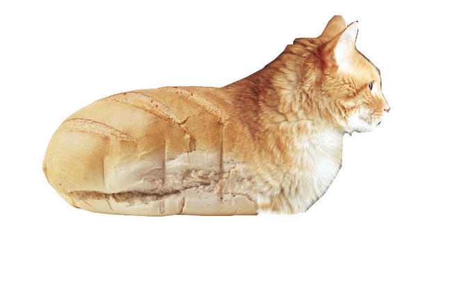 Cat_bread_by_justxguess.jpg