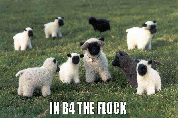 In b4 the flock