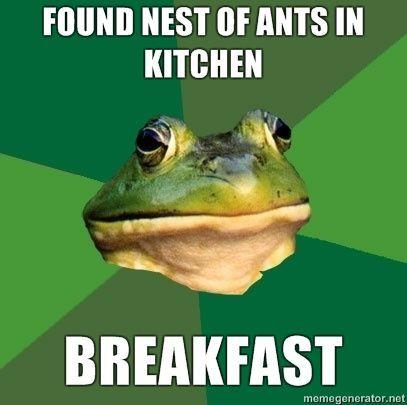 FOUND-NEST-OF-ANTS-IN-KITCHEN-BREAKFAST.jpg