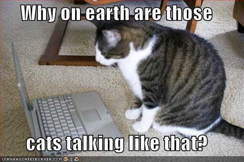 funny-pictures-offended-cat-laptop.jpg