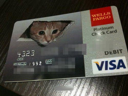 ceiling-cat-credit-card.jpg