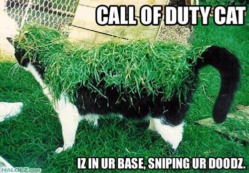 cod-cat.jpg