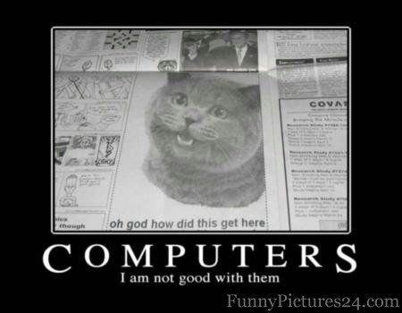 funnycat223.jpg