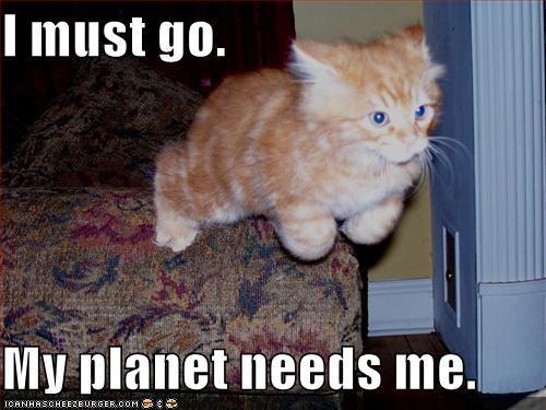 funny-pictures-planet-needs-superkitten.jpg