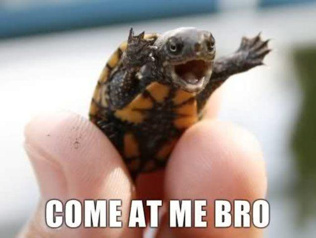 Come at Me Bro Baby Green Turtle Image