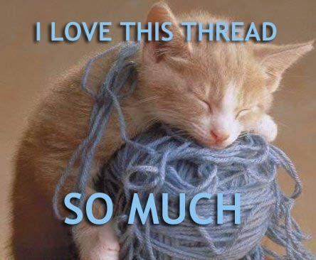 cat-cats-kitten-kitty-pic-picture-funny-lolcat-cute-fun-lovely-photo-images-i-love-this-thread-so-much.jpg