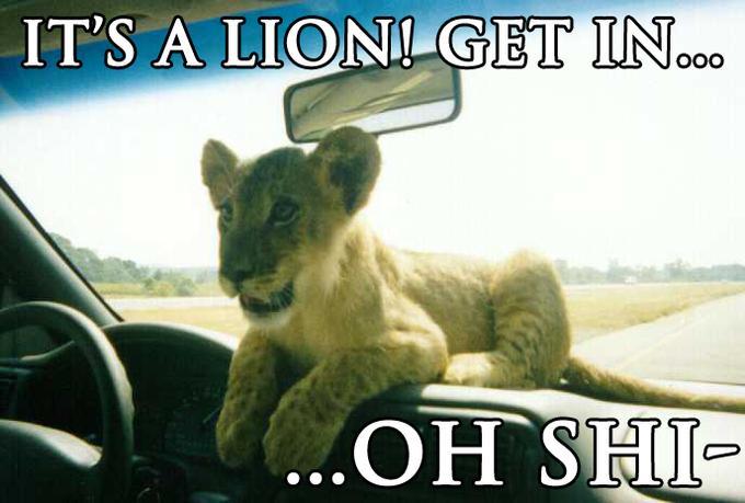 lionohshi.jpg