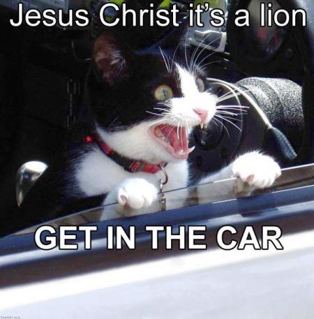 450px-Jesus_Christ_it's_a_lion_Get_In_The_Car!.jpg