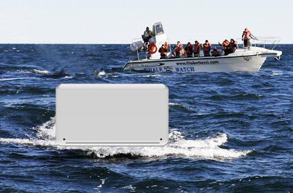 whalewatchingsamana.jpg