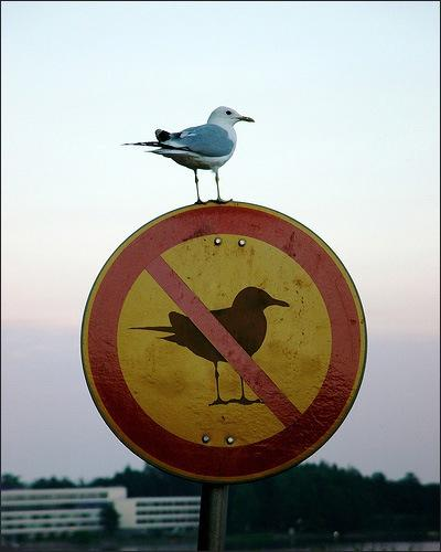 myth-bird-on-sign.jpg