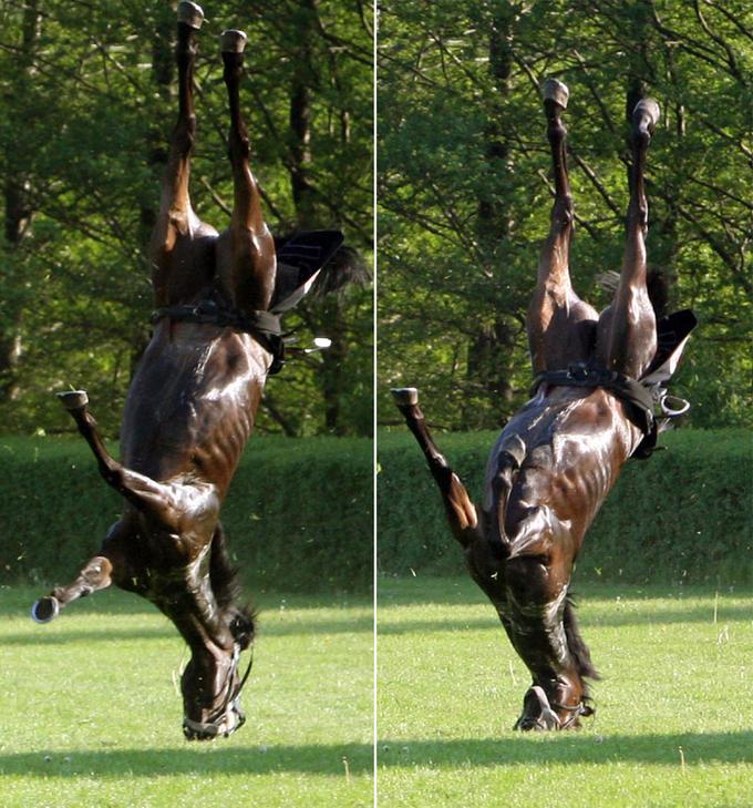 4germanhorse1405_800x858.jpg