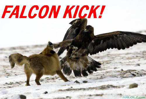 falcon_kick_How_to_meet_the_girl_of_your_dreams-s500x339-134144-580.jpg
