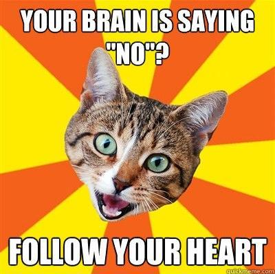 advice-cat-benekman18.jpg