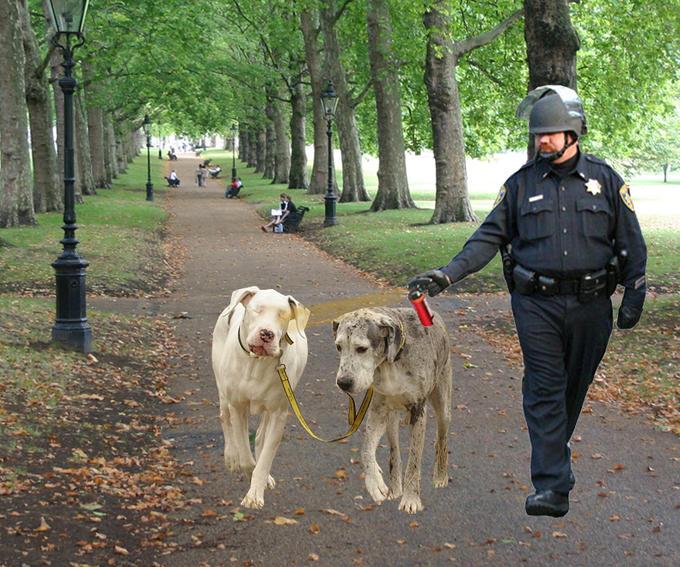 peppercop_dogwalk.jpg
