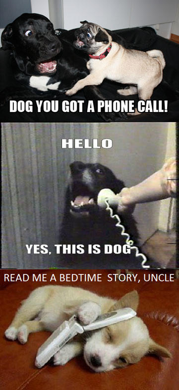 YES-THIS-IS-DOG-5.jpg