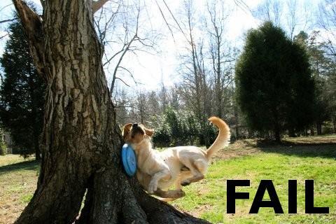 dog_fail-14147.jpg