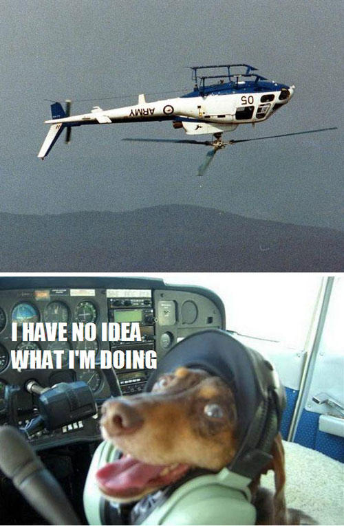 i have no idea what im doing dog meme